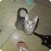 Adopt A Pet :: Andy - Medina, OH