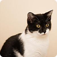Adopt A Pet :: Edy - Ashland, MA