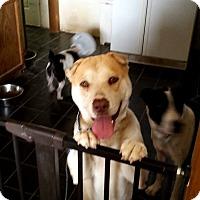 Adopt A Pet :: Ellie - Mira Loma, CA