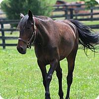 Adopt A Pet :: Annie Leader - Nicholasville, KY