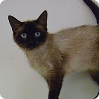 Adopt A Pet :: Meesha - Hamburg, NY