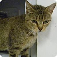 Adopt A Pet :: Tabitha - Hamburg, NY