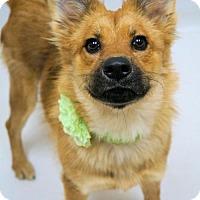 Adopt A Pet :: 1509-1643 Fairy Dust - Virginia Beach, VA