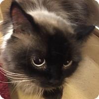 Adopt A Pet :: Milo - Monroe, GA