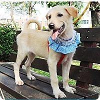 Adopt A Pet :: Fynn - Surrey, BC