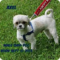 Adopt A Pet :: Axel - Huddleston, VA