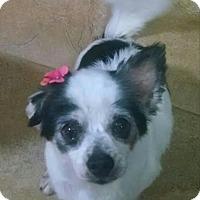 Adopt A Pet :: Maizy - San Diego, CA