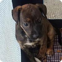 Adopt A Pet :: Maggie - Waldorf, MD