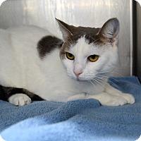 Adopt A Pet :: Suji - Wheaton, IL