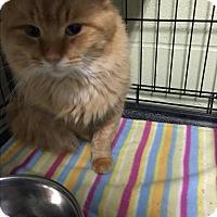 Adopt A Pet :: Christopher - Holland, MI