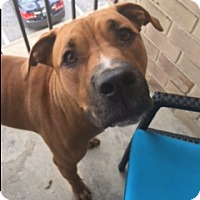 Adopt A Pet :: Roxy (COURTESY POST) - Baltimore, MD