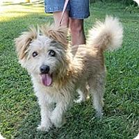 Adopt A Pet :: Sparky - Sudbury, MA