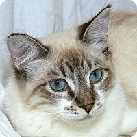 Adopt A Pet :: Minx M - Sacramento, CA