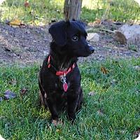 Adopt A Pet :: Khloe - Coopersburg, PA