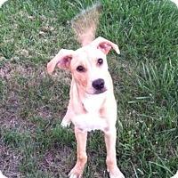 Adopt A Pet :: Pluto - Buffalo/Rochester, NY