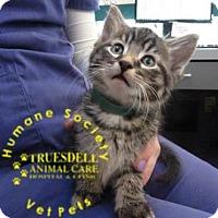 Adopt A Pet :: Aspen - Janesville, WI