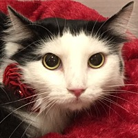 Adopt A Pet :: Fleur - Pasadena, TX