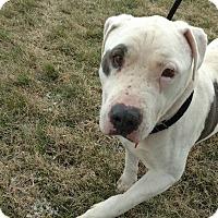 Adopt A Pet :: Tom - Cleveland, OH