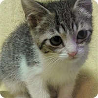 Adopt A Pet :: FIONA - Corona, CA