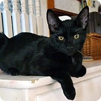 Adopt A Pet :: Ringo (JT) - Little Falls, NJ