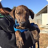 Adopt A Pet :: Aye - Washington, DC