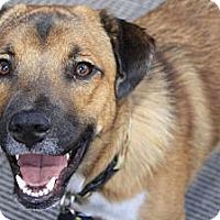 Adopt A Pet :: Dalton - Westminster, CO