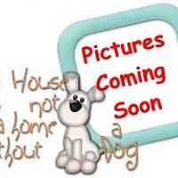 Adopt A Pet :: Puppies M&F - Orlando, FL