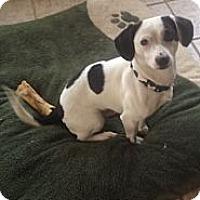 Adopt A Pet :: Milo - Saint Louis, MO