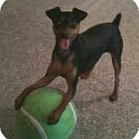 Adopt A Pet :: Roxie - Atlanta, GA