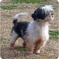 Adopt A Pet :: Marco - Mooy, AL