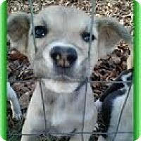 Adopt A Pet :: Heather - Staunton, VA