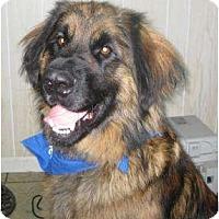 Adopt A Pet :: Benson - ADOPTION PENDING!!! - Antioch, IL