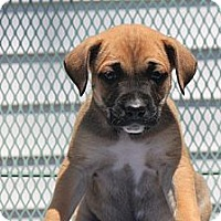 Adopt A Pet :: McCartney - ARDEN, NC