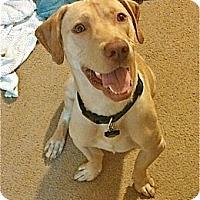 Adopt A Pet :: Lige - PORTLAND, ME