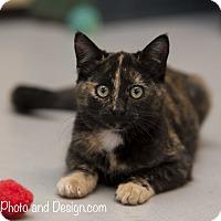 Adopt A Pet :: Stripe - Fountain Hills, AZ