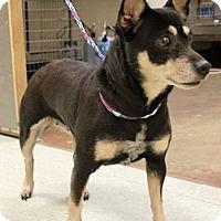 Adopt A Pet :: HALLE - Ridgewood, NY