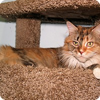 Adopt A Pet :: Harati and Ombre - Milford, MA