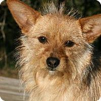 Adopt A Pet :: Izzy - Beavercreek, OH