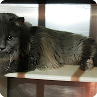 Adopt A Pet :: Fritz - Geneseo, IL