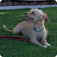 Adopt A Pet :: Bonnie formerly Bellatrix - Las Vegas, NV
