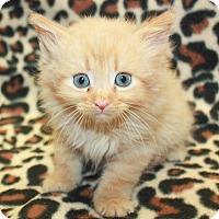 Adopt A Pet :: Hemi - Sparta, NJ
