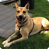 Adopt A Pet :: Fawn - Sudbury, MA