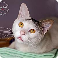 Adopt A Pet :: Sarge - Lyons, NY