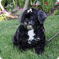 Adopt A Pet :: KENDRA - Newport Beach, CA