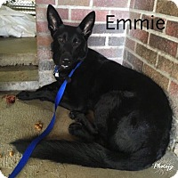 Adopt A Pet :: Emmie - New Ringgold, PA