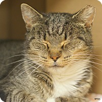 Adopt A Pet :: Tricia - East Hartford, CT