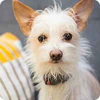 Adopt A Pet :: Russell - Oakland, CA