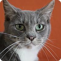 Adopt A Pet :: Scarlett - Sarasota, FL