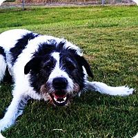 Adopt A Pet :: Bosco - Bedminster, NJ