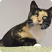 Adopt A Pet :: Autumn - Farmington Hills, MI